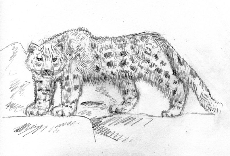 檔案:Snow leopard by Lixihan 1.jpg